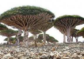 Своеобразные деревья